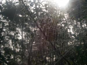 closeup, spiderweb, morning, dew