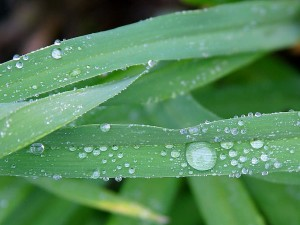 dew, rainy, moning