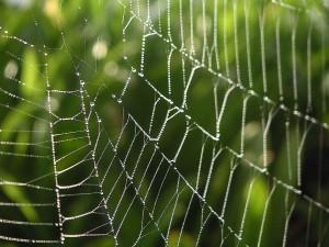 dew, spiderwebs