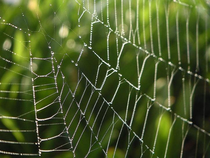 dew, spiderwebs