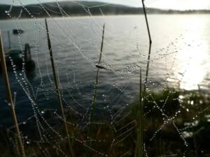 rugiada, coperto, ragno, web, acqua