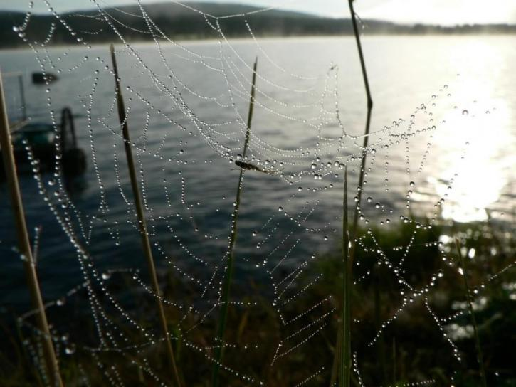 dew, covered, spider, web, water