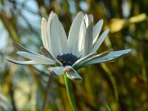 dew, flowers, petals