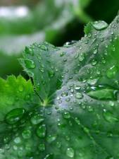 dew, water, droplets, drops
