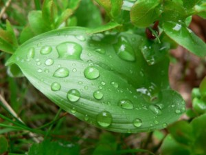 raindrops, green leaf