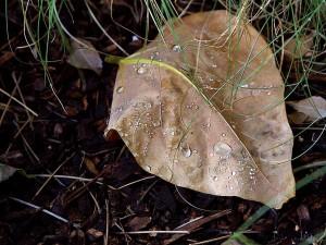 water, drops, leaf