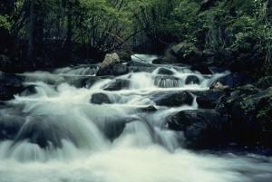 rapide, montagne, rivière, brumeux, chute d'eau