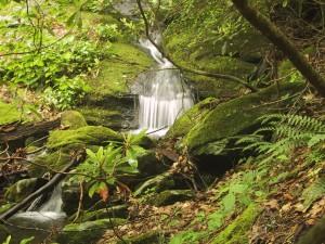 chute d'eau, ruisseau, courant, moussu, glen