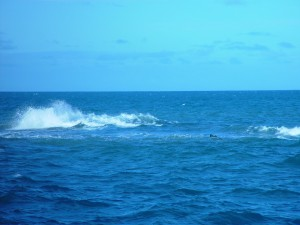 wave, open, sea