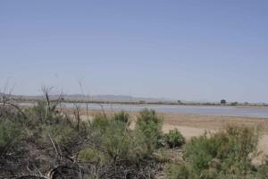 vegetation, wetlands