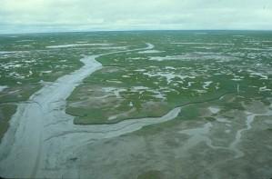 aérienne, la photographie, vert, marais, zone