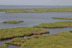 aérien, des marais, des zones humides