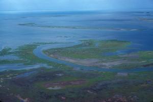 aerial, swamp, summer