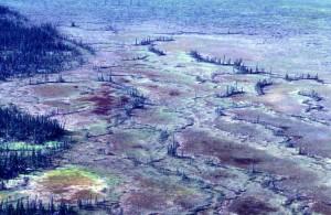antenne, våtmarker, skog