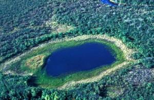 antenne, våtmarker, dammen