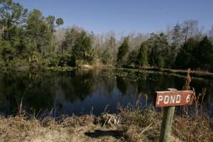 aquatic, environment, pond, landscape