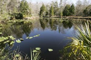 acquatico, ambiente, palude, acqua, paesaggio