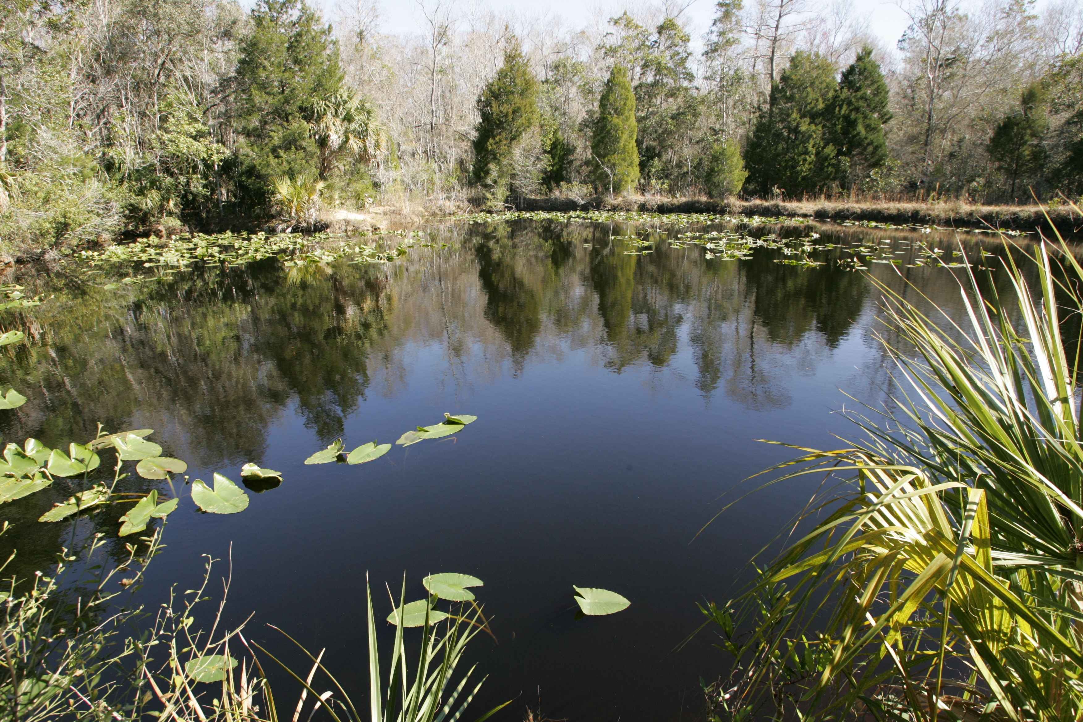 free picture aquatic environment swamp water landscape