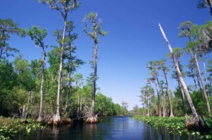 bald, cypress, swamp, open, areas, canoe, boat, trails