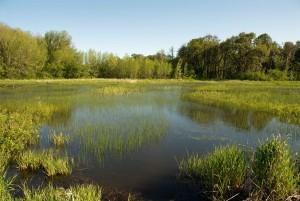 krásna, krajina, zelená, močiare, kľudný, vody