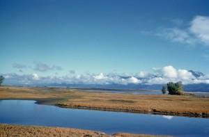 beau, paysage, marécageux, terrain