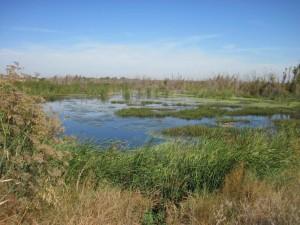 beau, marais, zones humides, paysage