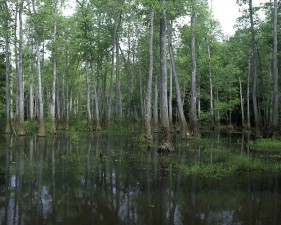 bond, swamp, wilderness, refuge, Georgia