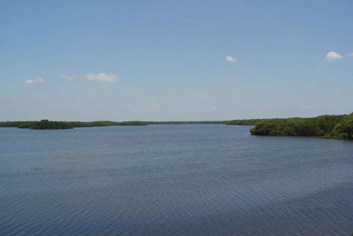 calm, water, lake, wetland area