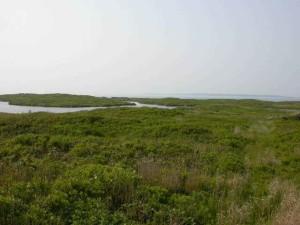 coastal, marsh, flora