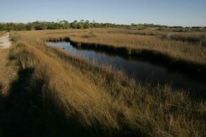 pobřežních mokřin, vysoká tráva, krajina