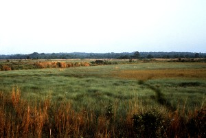 densely, vegetated, jersey, salt marsh, divided, two, regions, high, marsh, low, marsh