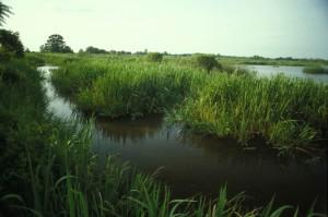 expansive, zones humides, méandre, les cours d'eau, la végétation
