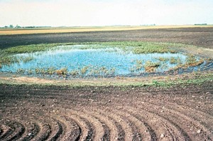 farming, affecting, wetland, agricultural, fields