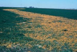 fleurs, des zones humides, en Californie
