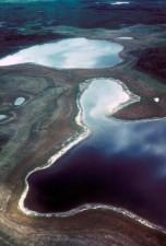 flying, wetlands