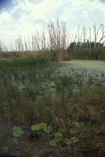 grasses, trees, aquatic plants, wetlands
