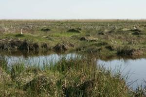 élevé, herbe, zone marécageuse, scénique