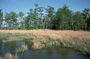 high, water, grass, swamp