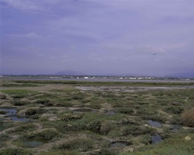 huge salt marshes, surrounding, San Diego, bay