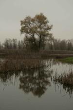 l'image, les arbres, l'eau, les zones humides