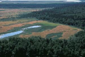 INNOKO, refuge, zones humides, forêt