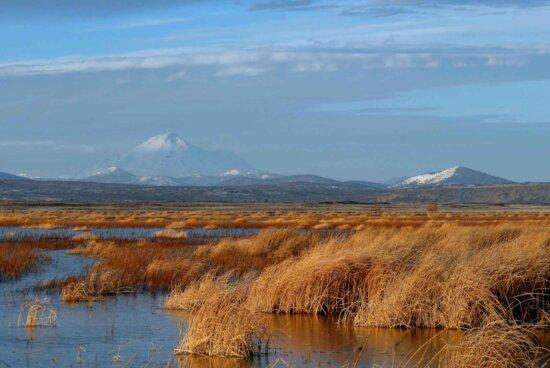 lake, marsh, grass, summer