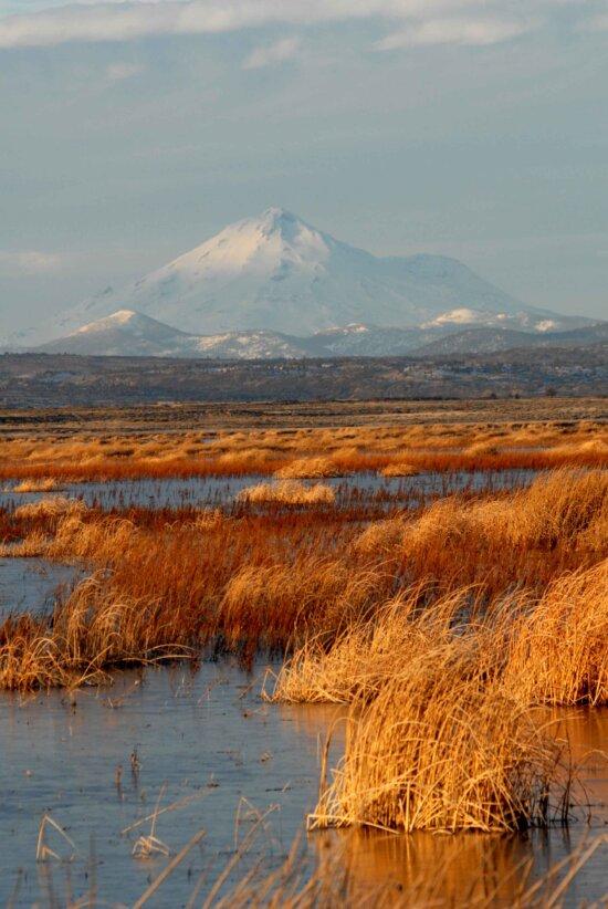 lake, marsh, mountain, background