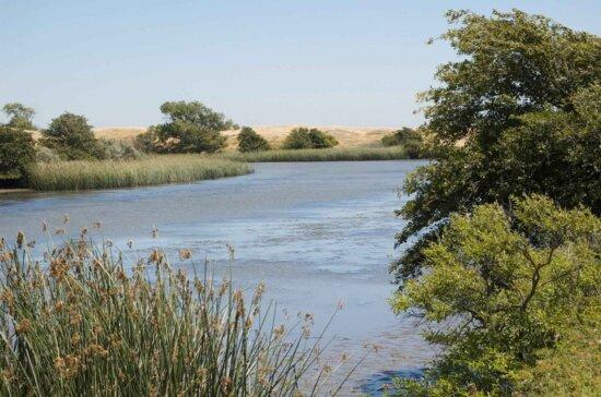 lindsey, slough, Sacramento, river, basin