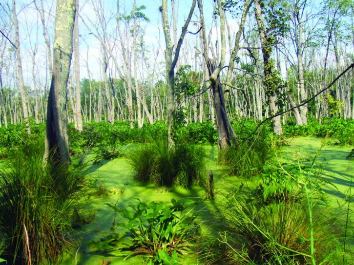 lush, green, swamp, plants, landscape