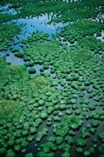 mangrove, maze