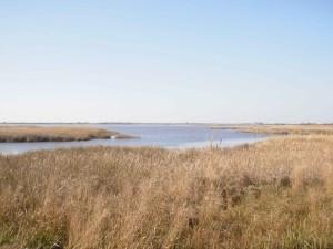 palude, lago, habitat naturale