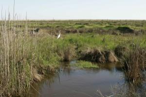 marsh, area, scenic