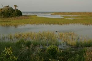 marsh, marine, environments