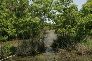 marsh, tropical, environment